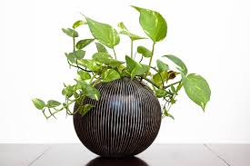 Plants In Bathroom According To Vastu by 3 Houseplants To Help You Feng Shui Your Home For Spring