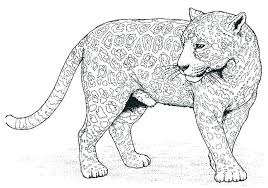 Black Panther Coloring Page Pages Animal Kids