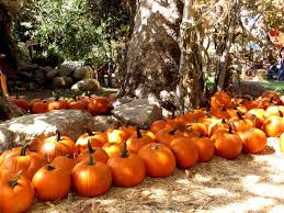 Irvine Great Park Pumpkin Patch by Irvine Park Railroad U0027s Pumpkin Patch Perfect For Families Of All
