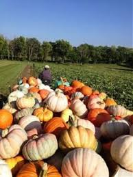 Pumpkin Patch Greenbrier Arkansas by Pumpkin Farm Johnson Farms Plants U0026 Pumpkins