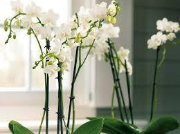 plantes pour bureau leçon de déco quelle plante pour mon bureau décoration