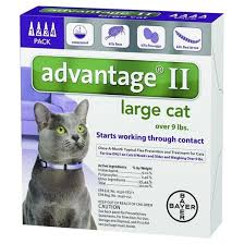 flea treatment for cats bayer advantage ii topical flea prevention and treatment large