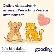 Post Von Getty Images Oder Extrem Teurer Cat Content Bachmichels