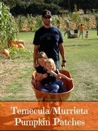 Pumpkin Patch With Petting Zoo Inland Empire by Temecula Pumpkin Patches The Typical Mom