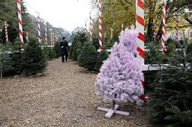 Silver Tip Christmas Tree Los Angeles by 12 Best Christmas Tree Farms In The Bay Area