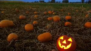Pumpkin Patch Houston Tx Area by Houston Area Pumpkin Patches For This Fall Season Abc13 Com