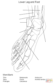 Draw Anatomy Coloring Pages 24 On Free Book With