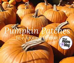 Nearest Pumpkin Patch Shop by Pumpkin Patches Around Detroit