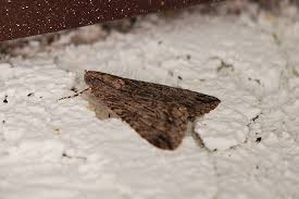 Getting Rid Moths In Clothes Closet Wool Reduced To Dust By