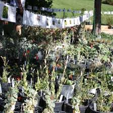 2018 fall bulb plant sale