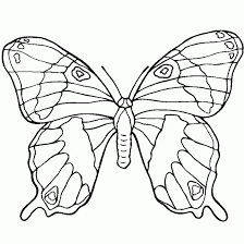 Free Ulysses Butterfly Coloring Page