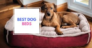 best orthopedic dog bed 2017 best dog beds cheap and comfortable