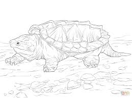Click The Walking Alligator Snapping Turtle Coloring Pages To View Printable