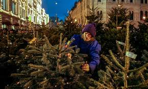 Christmas Tree Has Aphids by The Eco Guide To Christmas Trees Environment The Guardian