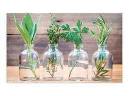 grazdesign bilder auf glas kräuter im glas wandbilder glas