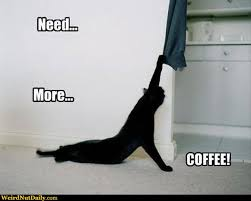 cat coffee pictures weirdnutdaily cat coffee addict