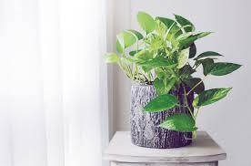 pflanzen fürs wohnzimmer diese sorten eignen sich perfekt