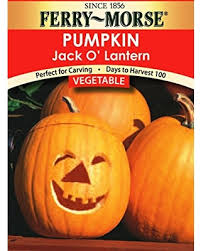 Bigs Pumpkin Seeds Walmart by Check Out These Bargains On Ferry Morse Jack O Lantern Pumpkin
