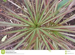 100 Natural Geometry Stock Image Image Of Green Structure 95589817