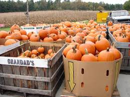 Pumpkin Patch With Petting Zoo by 500 Dollar Tomato The Apple Crawl