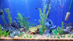 Star Wars Fish Tank Decorations by 50 Best Aquarium Backgrounds To Download U0026 Print Free U0026 Premium