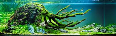 Aquascape | An Introduction | [T A G] Aquascape Designs For Your Aquarium Room Fniture Ideas Aquascaping Articles Tutorials Videos The Green Machine Blog Of The Month August 2009 Wakrubau Aquascaping World Planted Tank Contest Design Awards Awesome A Moss Experiment Driftwood Sale Mzanita Pieces Two Gardens By Laszlo Kiss Mini Youtube Warsciowestronytop