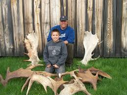 Shed Hunting Southern Utah by Quick Tips For Moose Shed Hunting U003e Big Woods Bucks Techniques