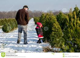 Tannenbaum Christmas Tree Farm Michigan by Perfect Little Christmas Tree In Snow Stock Image Image 35624201