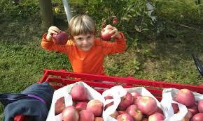 Grims Greenhouse Pumpkin Patch by Find Corn Mazes In Breinigsville Pennsylvania Grim U0027s Orchard And
