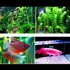 Spongebob Fish Tank Ornaments Uk by Aliexpress Com Buy Aquarium Led Lighting Fish Tank Smd Led Light
