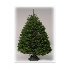 9 10 Ft Noble Fir Real Christmas Tree