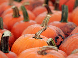 Pumpkin Patch Glendale Co by Six Family Friendly Farms Around Phoenix To Visit This Fall