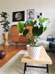 zimmerpflanze monstera ohne übertopf monstera deliciosa größe 75 85 cm