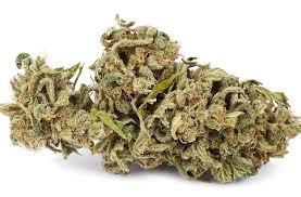verdammt teures cannabis 42 jähriger muss strafe zahlen