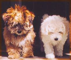 Dogs That Dont Shed Large by Puppies That Don T Shed Dogs That Dont Shed These Pups Don T Or