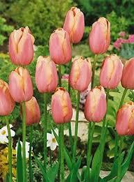 9 best whgc corner garden bulbs 17 images on