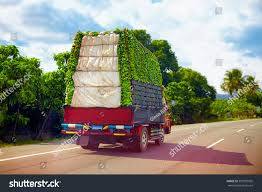 Truck Carrying Load Bananas Driving Through Stock Photo (Edit Now ... Semitrailer Truck Wikipedia Tramadol Ultram And Drug Testing Page 1 Ckingtruth Forum Transpro Burgener Trucking Premier Dry Bulk Company Financial Aid For Cdl Traing Us Truck Driving School Community Drivers Ed In Littleton Weminster Is The Right Career Path You Phoenix Sage Schools Professional And Driver Seriously Injured After Slides Off Highway Near Trenton Rocky Mountain Sherpa Review Bikeradar Cummins Repower Media Trip Day Two Blog Inc Tips To Navigate Winter In Colorado Mountains Part 2 Mintz