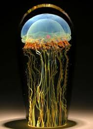 Jellyfish Mood Lamp Amazon by Amazon Com Jellyfish Mood Lamp Toys U0026 Games Wish List