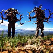 antler hunting season still a few weeks away vaildaily com