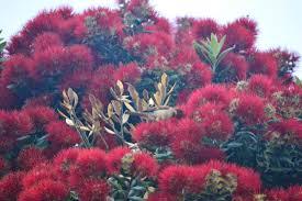 Christmas Tree Species Nz by Slutigram New Zealand 2014