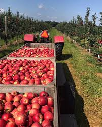 Pumpkin Picking Near Lancaster Pa by Pick Your Own Fruit Lancaster Pa Cherry Hill Orchards