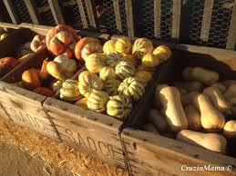 Pumpkin Patch Carlsbad Mall by Menifee Cruzin Mama