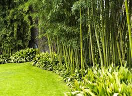 Backyard Privacy: 10 Best Plants To Grow - Bob Vila Ideas For Outdoor Privacy Screens Green Grass Extra Wide Back Garden Ideas 2833 Hostelgardennet 11 Ways To Create A More Relaxing Backyard Patio Spanish Style Cover Designs Choosing Bold Color Your Shed Old Brand New The Growers Daughter Front Yard Landscape Ask The Expert How Use Plants In City Garden Audzipan Anthology Pergola Oakley Our Land Organics With Trellis Better Homes And Gardens Best 25 Cheap Fence On Pinterest Panels