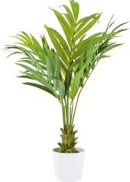 kunstpflanze kentia kunstpflanzen pflanzen wohnaccessoires