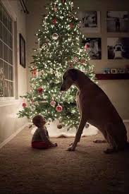 Driftwood Christmas Trees Devon by 286 Best Noël Images On Pinterest Christmas Time Christmas
