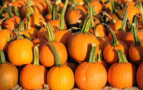 Pumpkin Patch Denver 2015 by Things To Do In Denver With Kids This Weekend Oct 6th U2013 Oct 8th