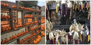 Best Pumpkin Patches Near Milwaukee by A Morning At Lindners Pumpkin Farm