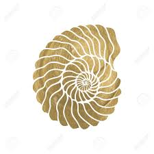 100 Sea Shell Design Graphic Circle Shell Isolated On White Background Tattoo