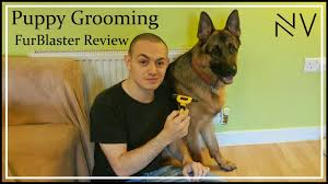 Shedding Blade German Shepherd by Grooming A German Shepherd Puppy Pt2 Furblaster Review Youtube
