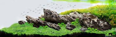 Dragon Stone Aquascape | Aquascaping | Planted Tanks | Aquariums ... 329 Best Aquascape Images On Pinterest Aquarium Ideas Floratic Visiting Paradise At Shah Alam Planted Aquarium Aquascape Things Aquariums Aquascaping Malaysia Diy Pertama Kali Aquascaping October 2010 Of The Month Ikebana Aquascaping World Sumida Aquarium Reloaded Fish Tanks And Designs Awesome A Moss Experiment Its All About Current Low Tech Tank Cuisine Wonderful Small Cubical Styles Planted The Surreal Submarine Amuse